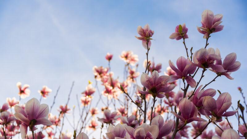 Tutti i benefici di una consegna fiori a domicilio su base mensile