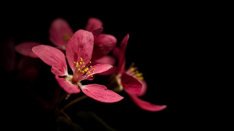 Servizio di vendita fiori online e spedizione